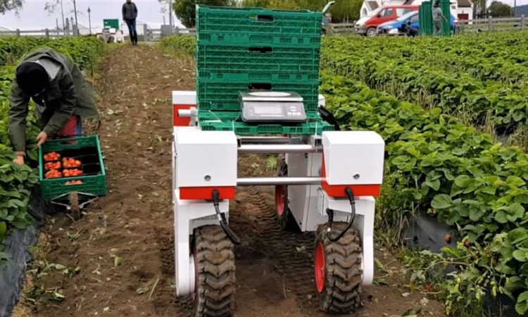 'Responsible innovation' key to smart farming