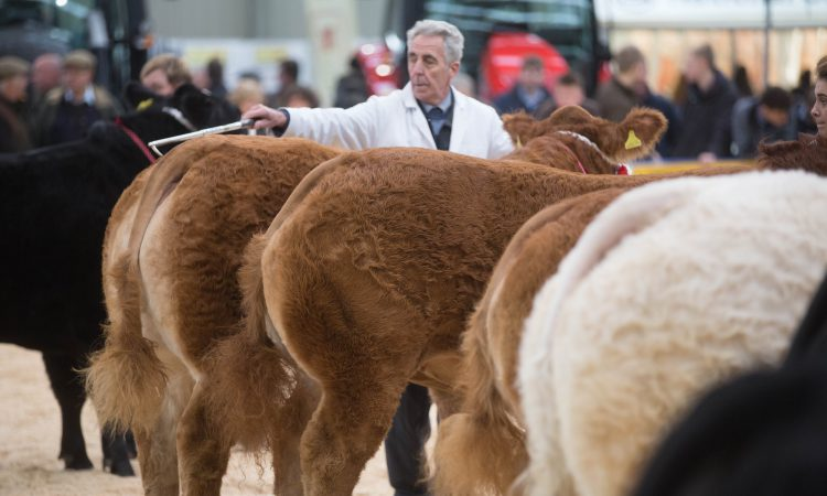 East of England prize pot doubled for supreme cattle champion