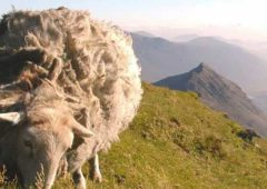 Sheep farmers urged to speak up against 'fake news'
