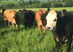 NFU Cymru voices 'strong opposition' to ammonia proposals