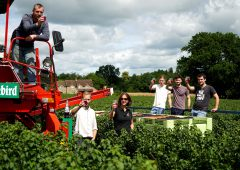 British Blackcurrant growers finish harvest at 12,000t