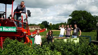 British Blackcurrant growers finish harvest at 12,000t