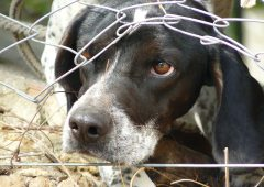 Parliamentary Committee finds Scottish dog control laws 'not fit for purpose'
