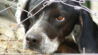 Animal cruelty maximum sentences to be increased tenfold