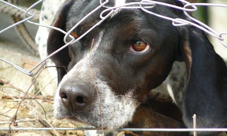 Dog attacks: Calls for dedicated police units in Wales