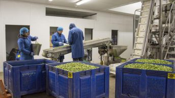 60,000 seasonal workers a year needed to feed Britain