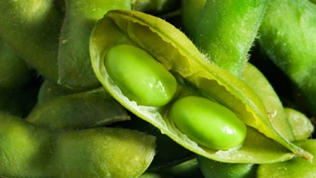 Industry joins forces to seek sustainable soya sourcing