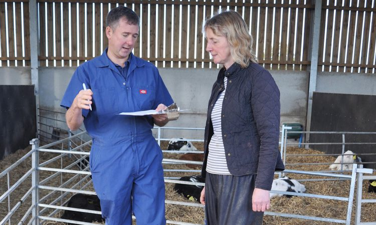 Dairy Day: Could a checklist approach improve your youngstock health?