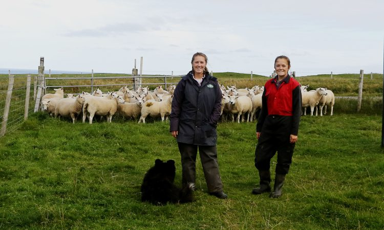 Monitor farm meet to discuss maximising business and livestock efficiency