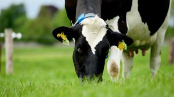 AHDB to expand its 'strategic dairy farm network'