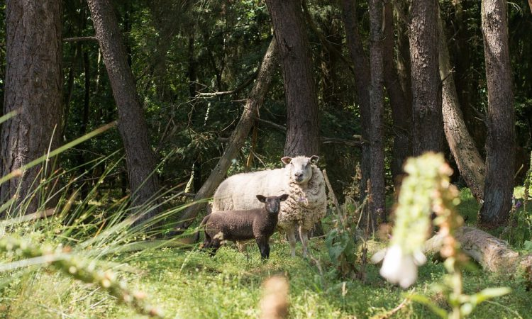 Government increases access for landowners' woodland creation grants