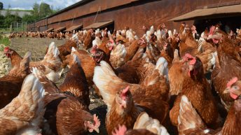 New free range contract to 'ensure fairness and restore confidence' in chain