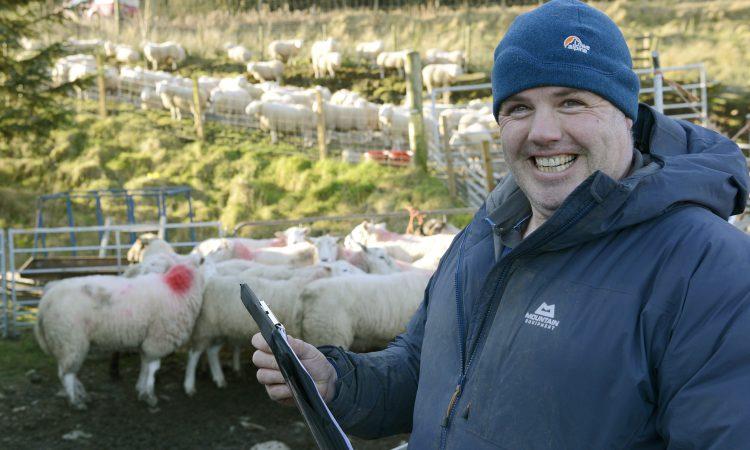 How one Scottish flock is tackling Liver Fluke