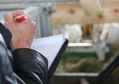 Official veterinarian struck off for falsifying slaughterhouse certificates