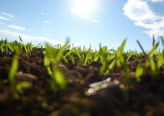 UK university makes major soil fertilisation break through