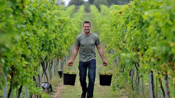Ag students' vineyard celebrates record harvest
