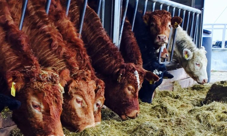 UK cattle vaccine use increases as antibiotics fall