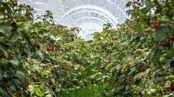 Fruitful result for British farmers as berry exports reach £22.1 million