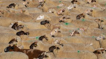 Covid-19 market disruption 'serious concern' for UK sheep sector