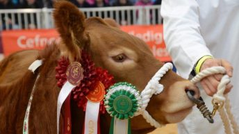 Welsh Winter Fair: Hard Brexit 'biggest threat' to Wales' red meat industry