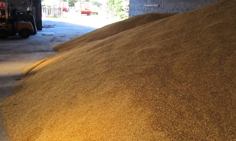 Grain price: Relatively stable, with the odd slump