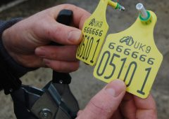 First NI farmer convicted for BVD-related movement offences