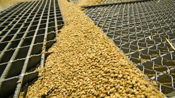 Grain price: Brexit causing LIFFE wheat to move slightly