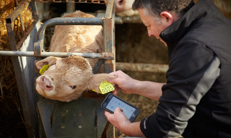Herdwatch underlines NI presence with trip to Winter Fair