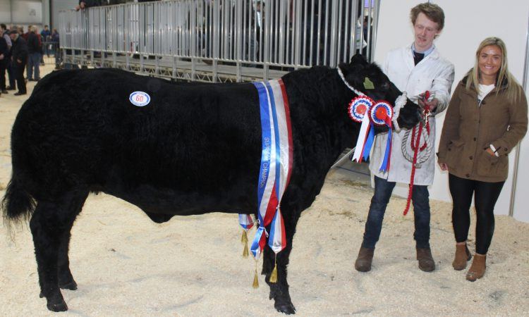 Miller steals the show at Beef and Lamb Championship