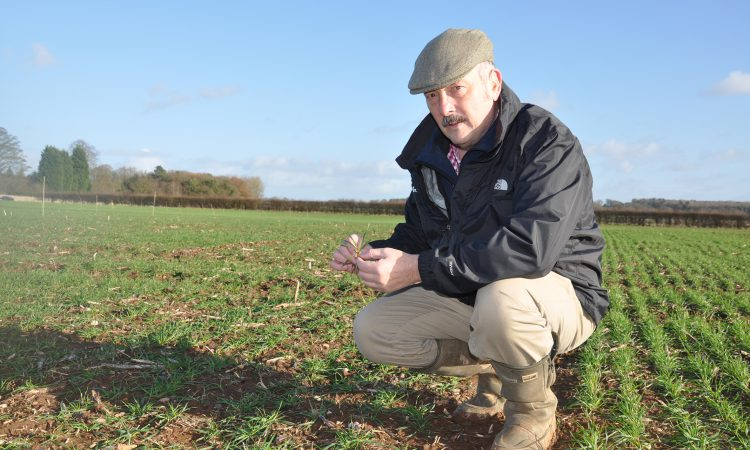 West provides research focus for UK's number one wheat disease