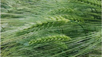 New Recommended Lists boasts exceptional disease resistance