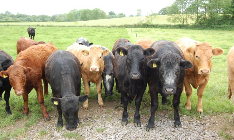 Event to help livestock farmers ensure their stock 'Meat the Market'