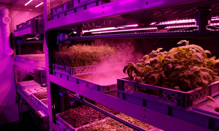 Innovative veg growing firm secures £1 million to build the farms of the future