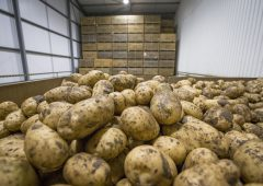 Potato processing firm fined £50,000 after worker is struck by telehandler