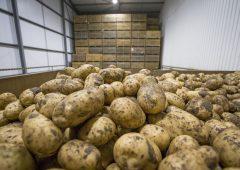 Potato processing firm fined £50,000 after worker is struck by telehandler