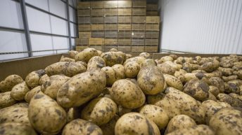 British potato supply chain making moves to protect stocks