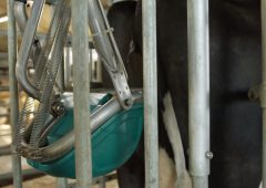 Dutch firm to test 'cow toilets' to cut farm ammonia emissions
