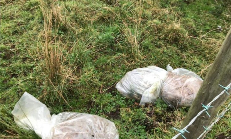 Dead calves found dumped in plastic bags