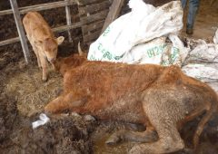 Inspectors find 58 carcasses on farm with extreme neglect