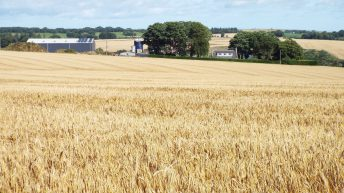 407.96ac commercial farm for sale in 2 lots in well-known farming area