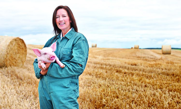 Scottish pig industry unites to eradicate endemic disease