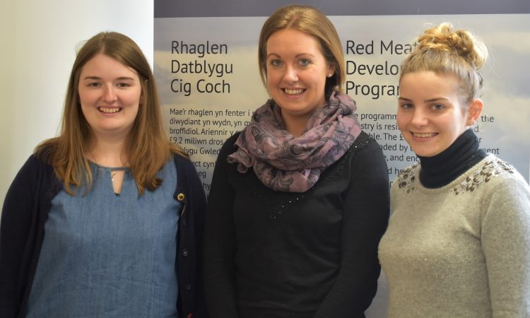 New flock and herd health officers to help drive Welsh red meat efficiency