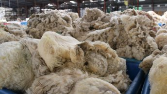 NSA calls for National Trust to ditch its fleeces