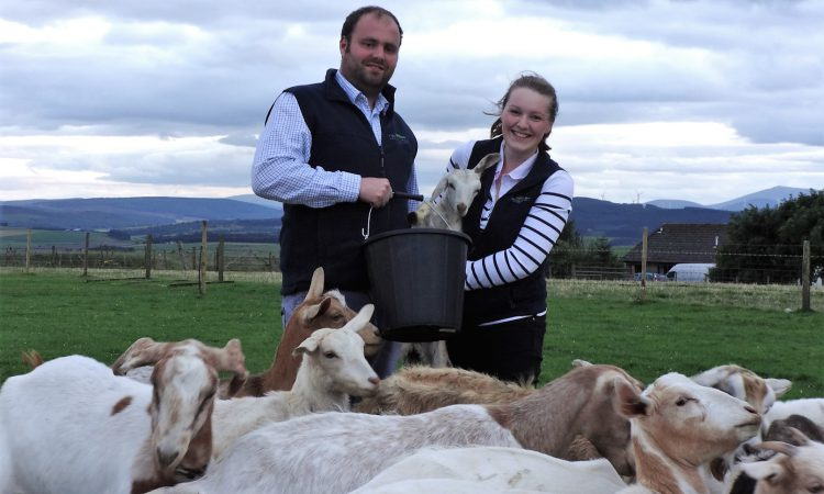 3 UK farms shortlisted for NEWBIE Awards