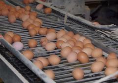 Businesses urged to buy British amid Dioxin egg recalls in Belgium