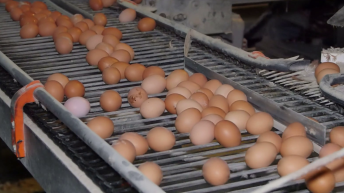 Businesses urged to buy British amid Dioxin egg recalls in Belgium