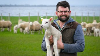 280 ewes lambed in 3 weeks off the shores of Lough Neagh