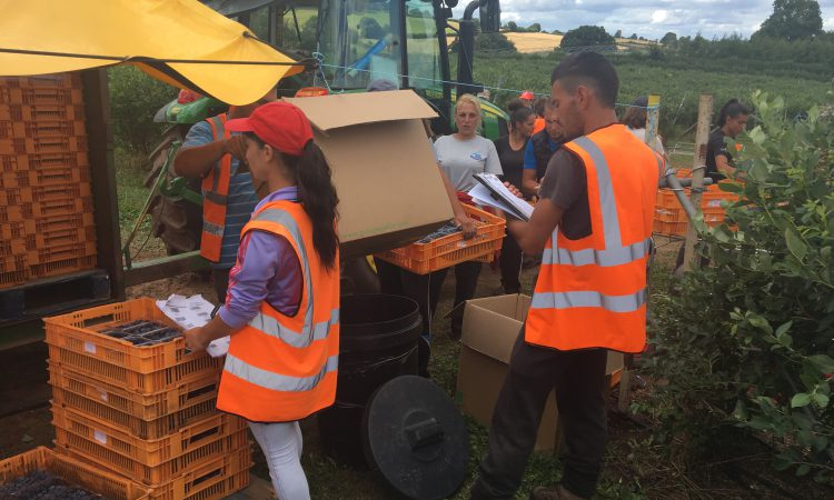 Growing champions in the next generation of fruit-pickers