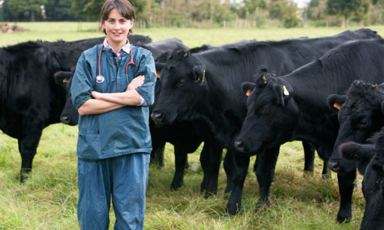 'Stamp Out' BVD campaign recruits 120 veterinary practices within 6 months