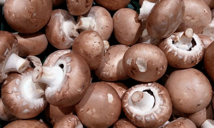Department to take NI growers on European mushroom tour